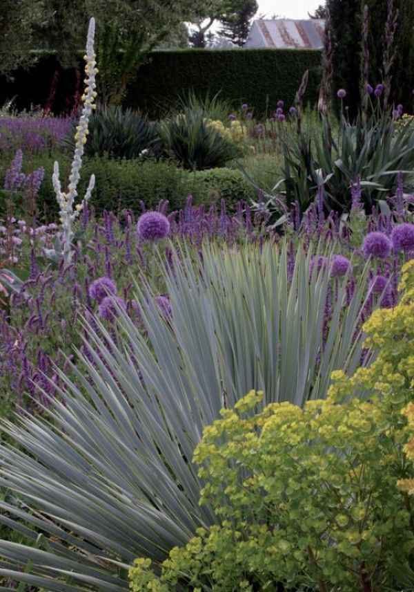 Australlian Dry Garden Textures | Gardening Ideas I Love | Pinterest | Dry  Garden, Gardens And Garden Ideas