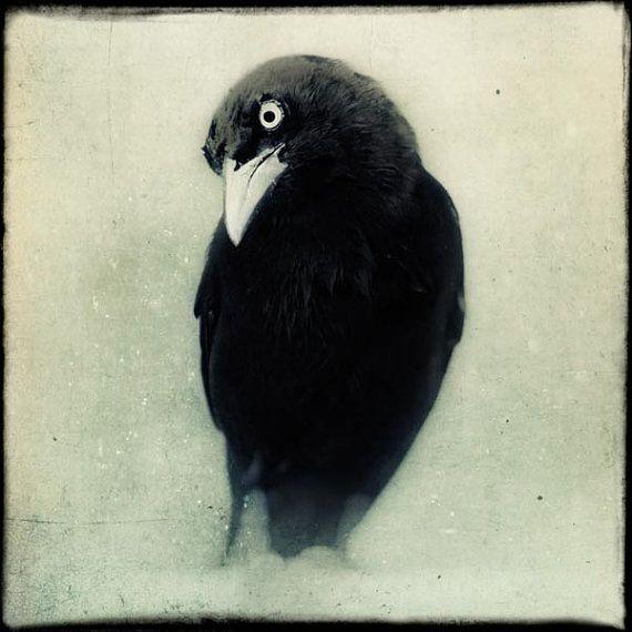Raven Sie, Kunstdruck, Crow Kunst, Halloween Dekor, Gotik, schwarz und weiß-Tierfotografie, Fine Art Print, Vogel Fotografie, Wanddekoration