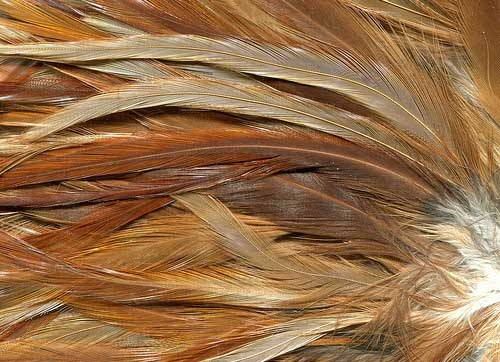 fur and feathers animal textures