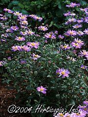 Landscaping Utah Gardening Utah :: Find Plants