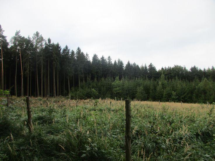 Les u Kouřimi - Středočeský kraj