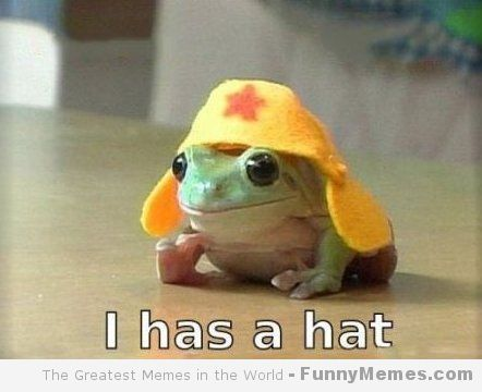 Just Something Funny: Cute memes – [I has a hat]