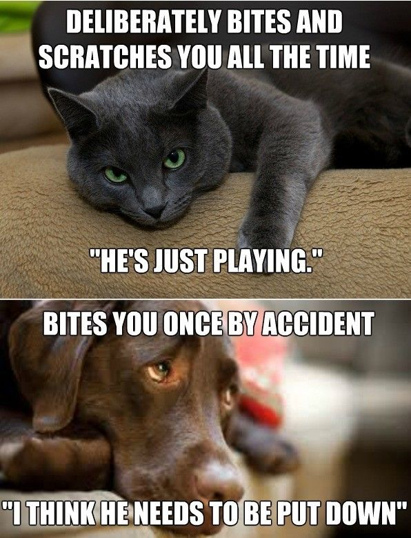 30 Cat Vs Dog Memes To Prove Who S The Boss Catmemes Dogmemes
