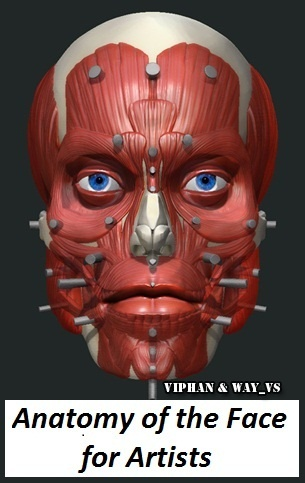 Anatomy of the Face for Artists - http://www.graphicshares.com/anatomy-of-the-face-for-artists/