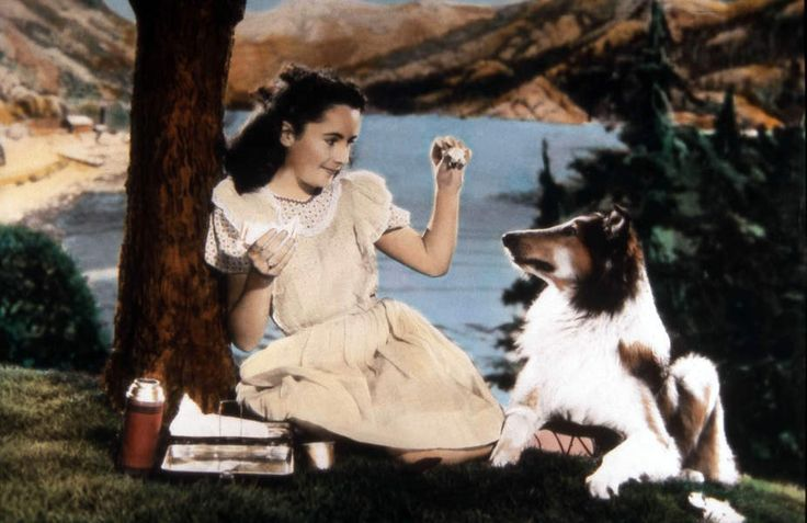 Courage of Lassie, Elizabeth Taylor, collie, Lassie, Domínio Público