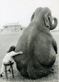 @Kelsey Cash - This is why we don't allow you around elephants.