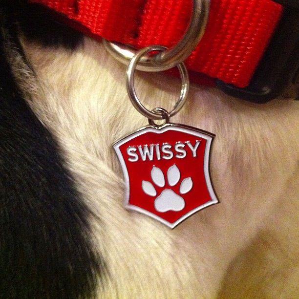 Swissy Dog Collars