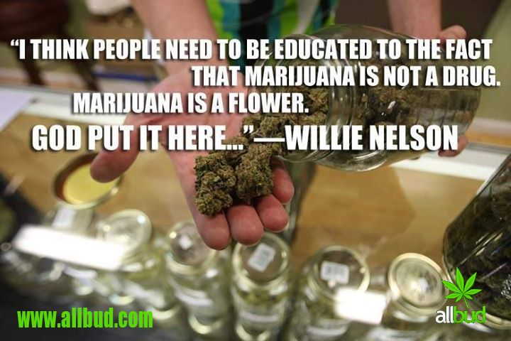 """I think people need to be educated to the fact that marijuana is not a drug. Marijuana is a flower. God put it here..."" -Willie Nelson #allbud #marijuana #cannabis #weed #drug #marijuanaflower #medical #medicalmarijuana #legalizemarijuana #use #smoke #enjoy #life"