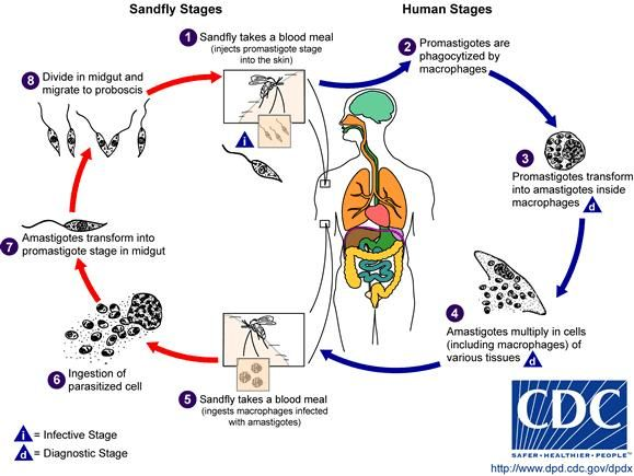 toxoplasmosis symptoms cdc