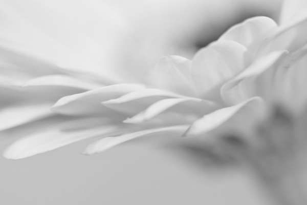 White on white daisy flower by AuroraMinna on Etsy