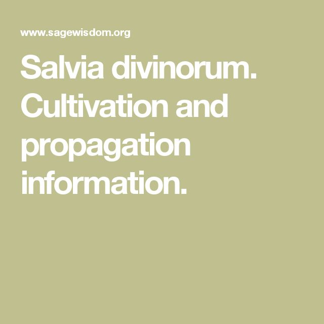 Salvia divinorum. Cultivation and propagation information.