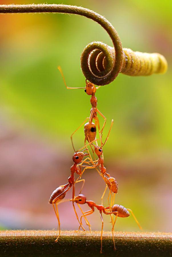 Exemplo de tabalho em equipe. Formigas sempre nos ensinando.