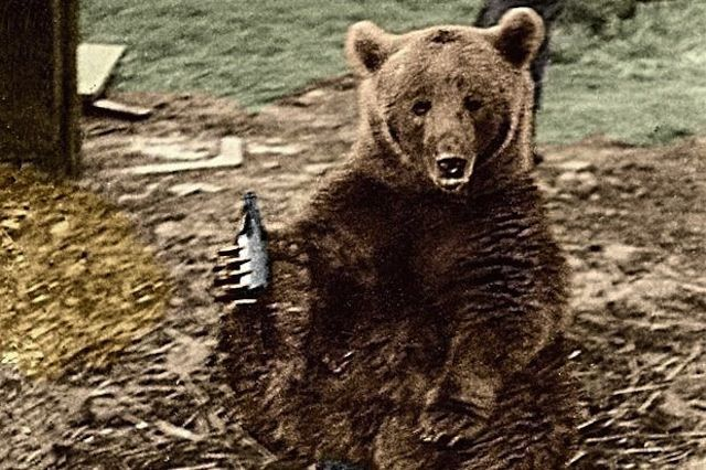 The Incredible Story of Wojtek, the Soldier Bear