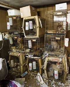 Puppy Mills - Imagine having to live like this, and there is nothing they can do to help themselves! SO,SO SAD!!!!