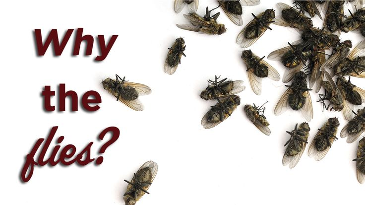 how to get rid of cluster flies in my house