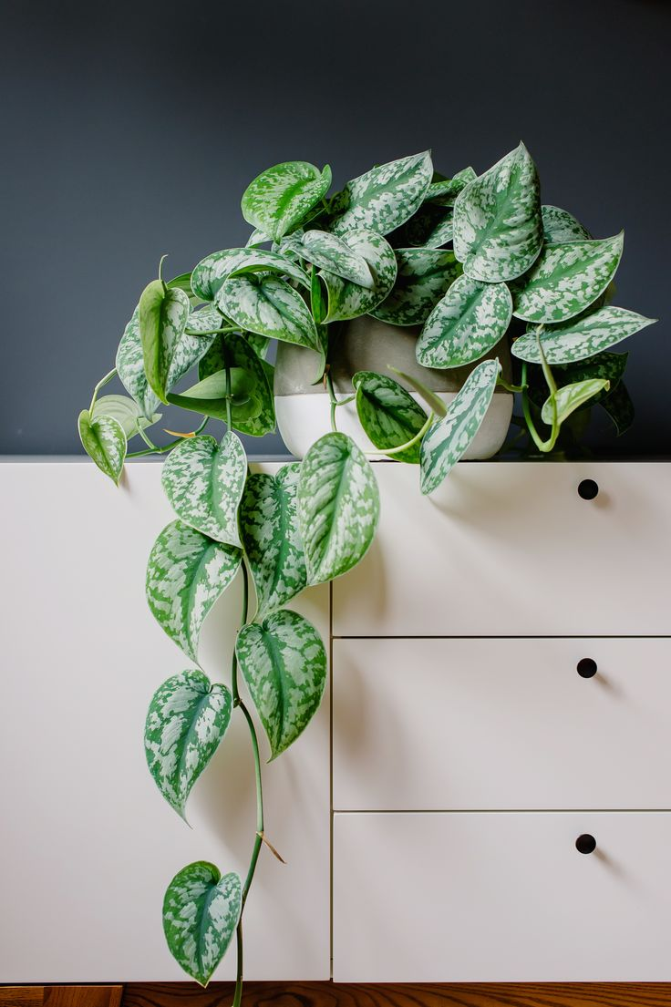 8 Best Images About Indoor Plants On Pinterest