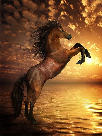 ✯ Freedom - Rearing Horse .. By Shanina Conway✯