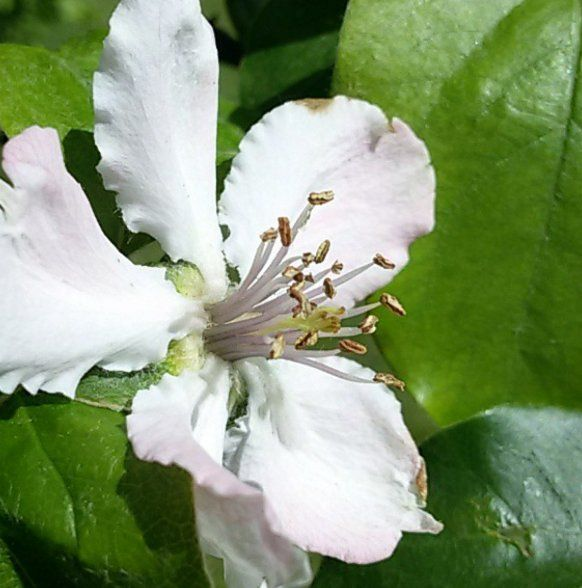#ecology #garden #flowers #apple #tree #holiday #relax #positive #healthylifestyle #zen #happy