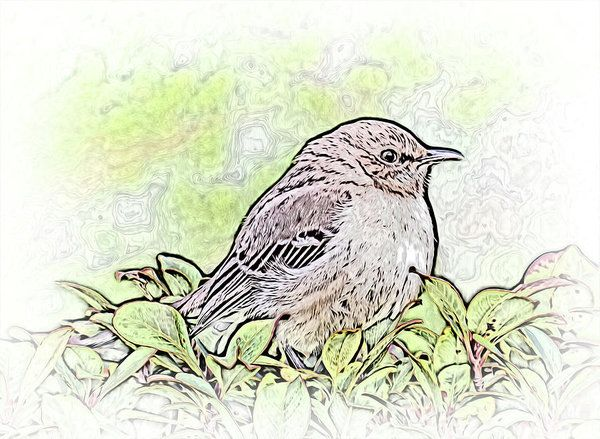 Mockingbird Color Sketch Art Print by Leslie Montgomery.  All prints are professionally printed, packaged, and shipped within 3 - 4 business days. Choose from multiple sizes and hundreds of frame and mat options.