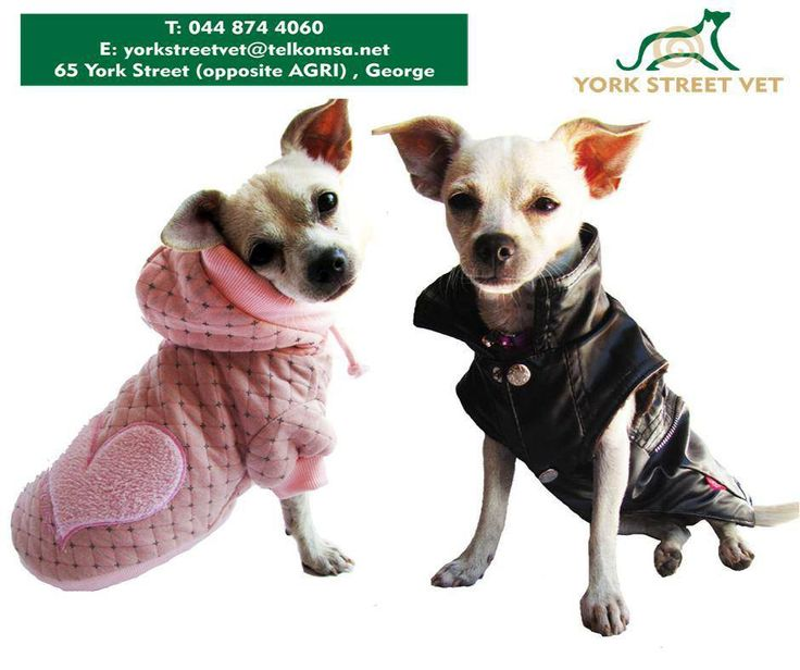 Keep your best friend warm this winter with our new assorted range of jerseys available from #YorkStreetVetShop. #jerseys #ilovemydoghttps://www.facebook.com/Yorkstreetvetshop/photos/pb.646016452164207.-2207520000.1439134251./802430339856150/?type=3