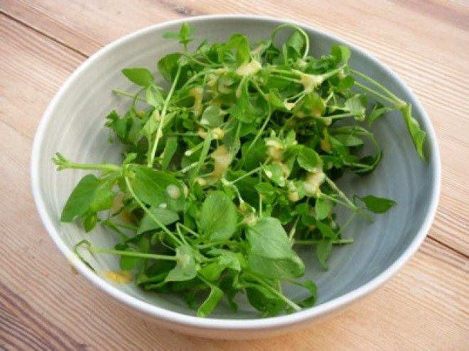 Tavasszal a legtöbb kertben megjelenik, de leginkább csak bosszantó, elpusztíthatatlan gyomnövényként ismerjük, pedig igencsak jelentős gyógyhatással rendelkezik. Ráadásul isteni saláta készíthető belőle!
