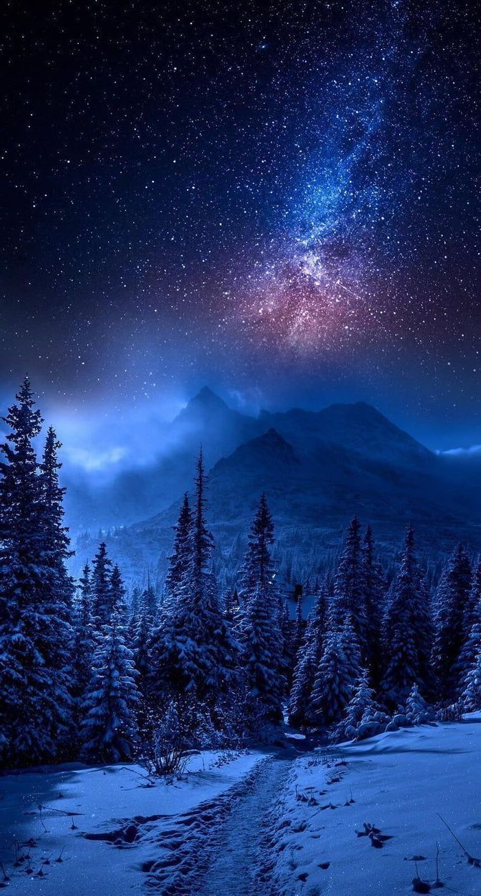 Forest Mountain Landscape Covered With Snow 2k Wallpapers Star Filled Sky Galaxy In 2020 Night Sky Wallpaper Night Sky Photography Iphone Backgrounds Nature