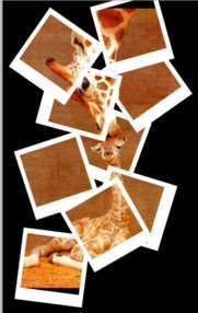 Create a Collage of Polaroids Using Photoshop CS5