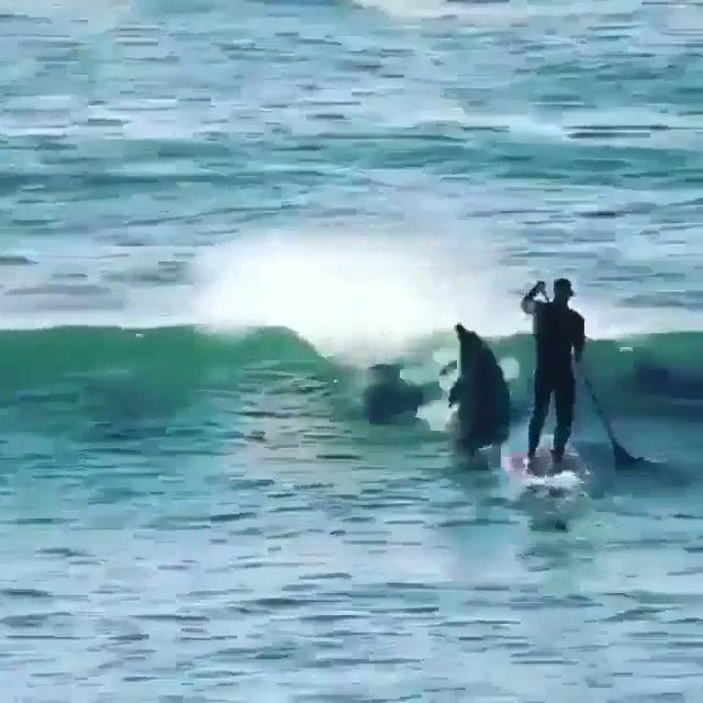 Dolphin Surfing Time 😁 – Meagan Pilleteri