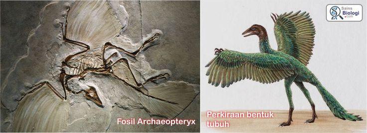 archaeopteryx sebagai Petunjuk Adanya Evolusi