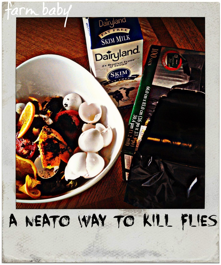 A Neat-O Trick for Killing Flies | farmbaby