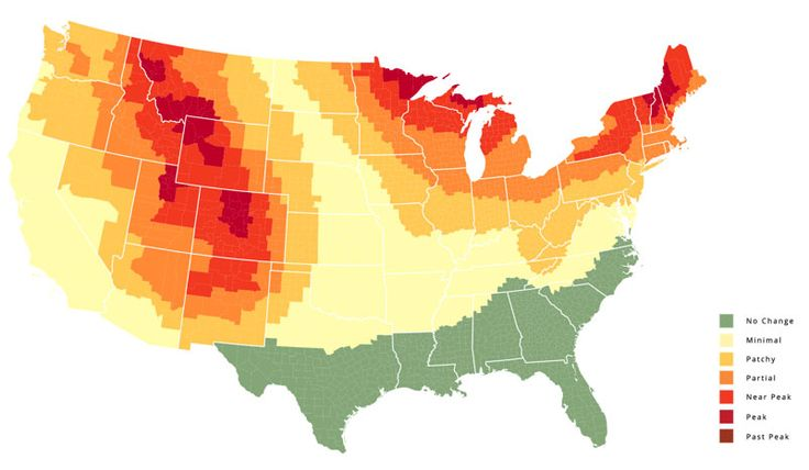 Map that can tell you how much fall foliage you'll get week by week