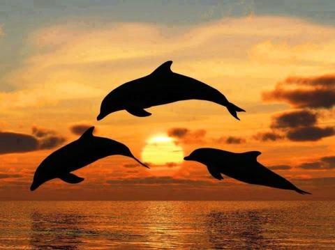 Golfinhos e o Pôr do Sol