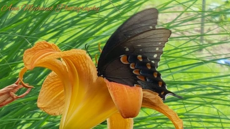 Butterfly ♡ 7/2017