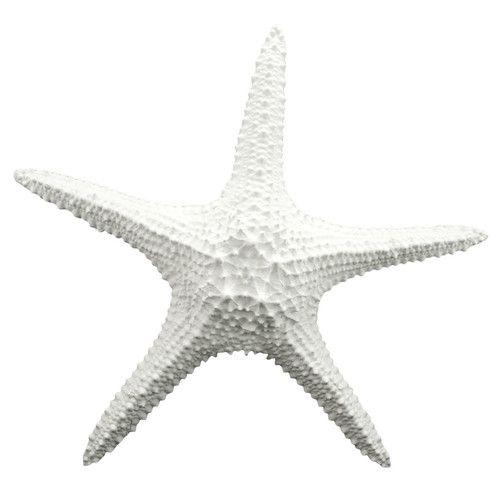 Found it at Joss & Main - Starfish Decor