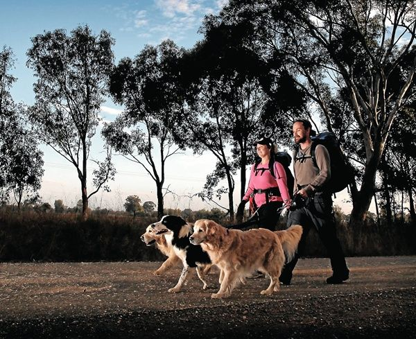 Walk honours society's working dogs