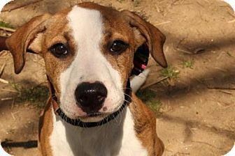 Pin by Jen Fullem on Places to Visit Pets, Adoption
