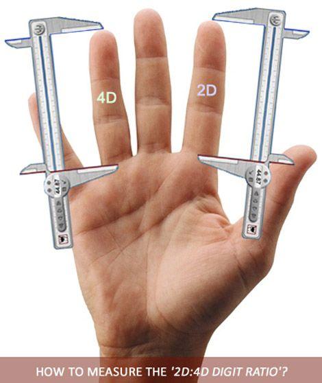 http://www.linksyard.com/fingers-measuring-to-husband-choosing/ 2d-4d-digit-ratio-finger-length