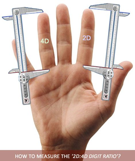 How to measure the 2D:4D digit ratio?