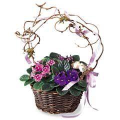 Violets in a Basket & Little Bird