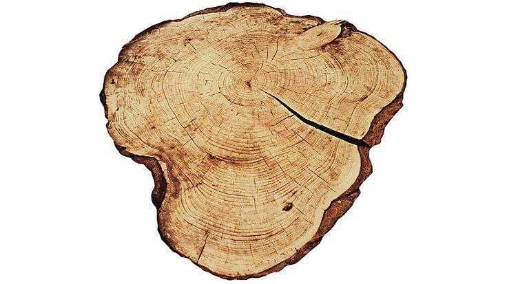 ZALA LIVING Karpet Boomschijf contour online bestellen? Dat doe je vandaag nog online bij OTTO. Profiteer van de ruime keuze ZALA LIVING Karpet Boomschijf contour en bestel direct.