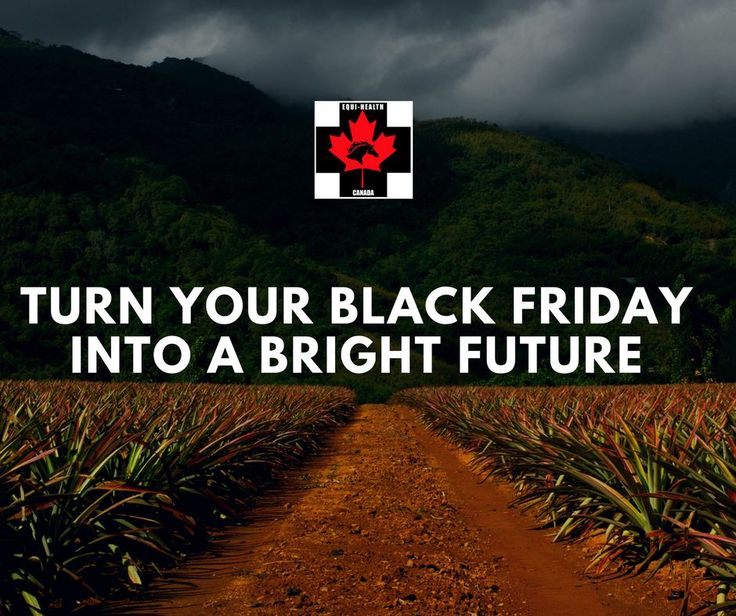(Part 3 of 3)  We want to help you enjoy more of what life has to offer. So this Black Friday weekend.... take $500 off the tuition. And you know what? We'll throw in the advanced training ($799) for free. We want you to have a bright future working with us - after all it really is all about the life... and the love..... of the horse.  http://www.equihealthcanada.com/join-the-team  #equihealthcanada #horse #firstaid #horses #ehc #deal #training #instructor #instructors