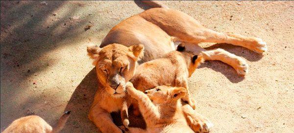 Jardim Zoológico celebra o Dia Mundial do Animal