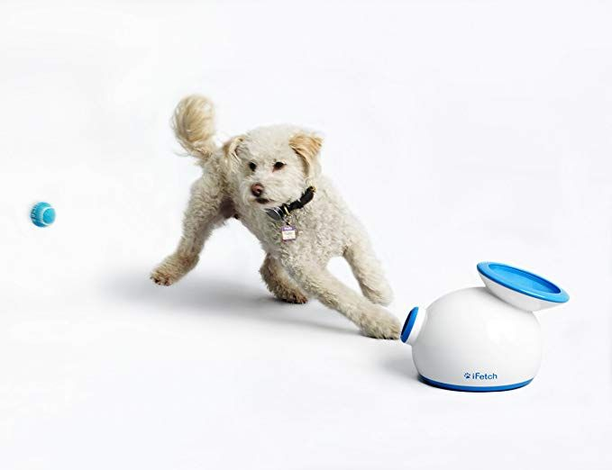 Amazon Com Ifetch Small Interactive Ball Thrower For Dogs