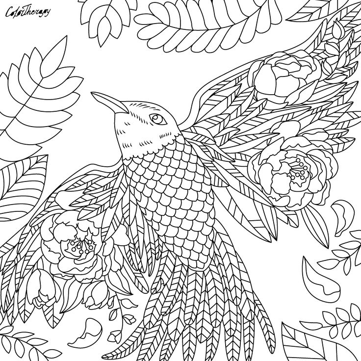 790 besten Animal Coloring Pages for Adults Bilder auf