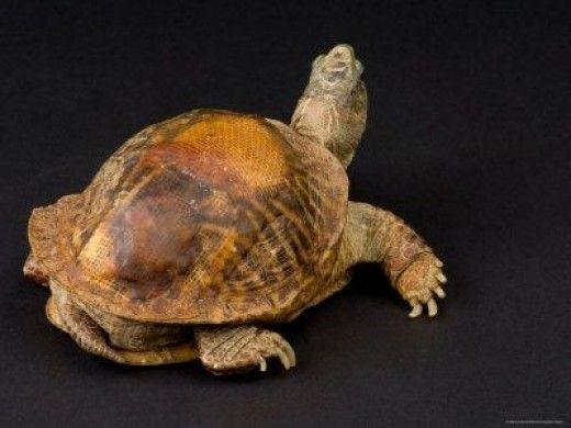 Reptile quiz