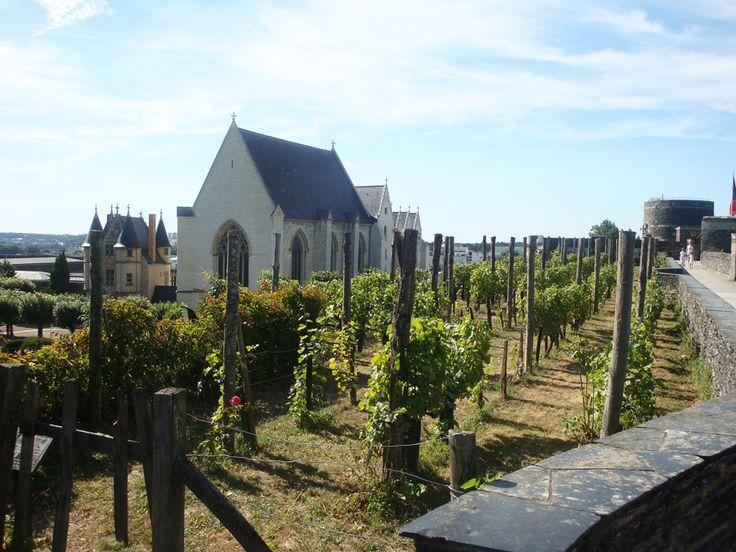 Vignes du Château d'Angers, vue sur la Chapelle et le Logis Royal. Maine et Loire, France.