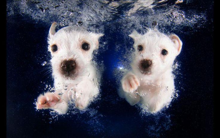 Tio löjligt söta valpar under vatten – Metro