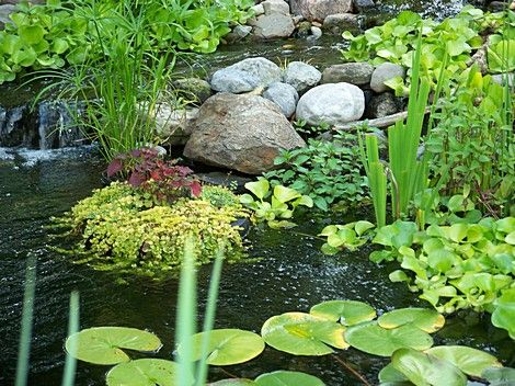 169 best images about d dry river beds water gardens on for Floating fish pond