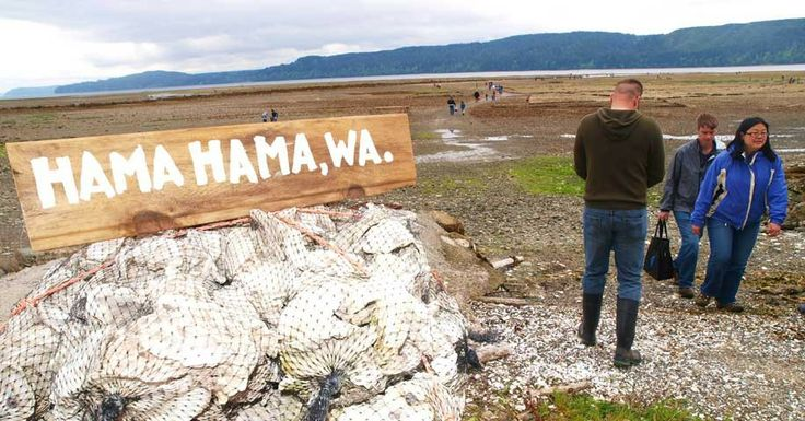 So looking forward to finally checking out Hama Hama Oyster Rama!! A distinctly NW oyster experience.