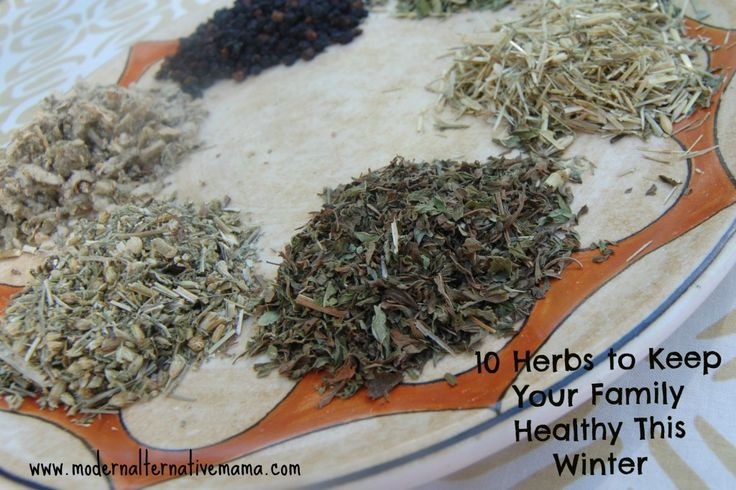 10 Herbs to Keep Your Family Healthy This Winter | Modern Alternative Mama